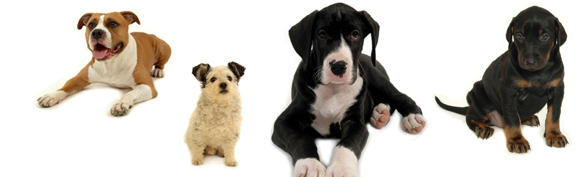 cq-adopt-a-dog